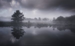 A marsh side lake in Dorset on an early summer morning