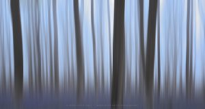 Intentional Camera Movement creates vertical patterns in a bluebell forest