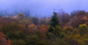 Autumn in full effect in the morning fog near Fort William, Scotland