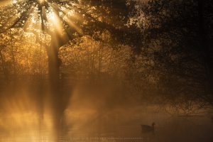 Warm light penetrates a foggy river scene in Sussex