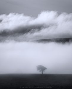 A single tree surrounded by morning banks of low cloud in Sussex