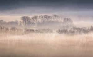 Early morning fog swirling around the Dorset Countryside