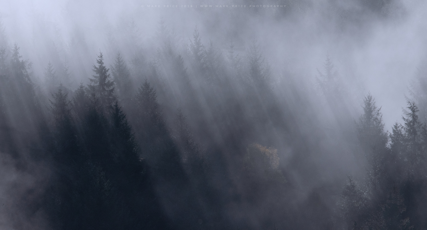 Shafts of light penetrate the fog in a Scottish forest