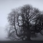 A Sussex Tree during a foggy winter morning