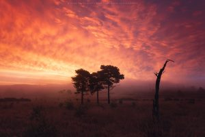 Extraordinary conditions at dawn in the Ashdown Forest, Sussex