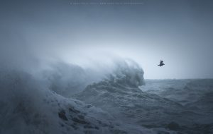 A sea bird swoops away from the raging swell of the ocean during a Sussex storm