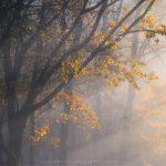The full gamut of Autumn in Sussex