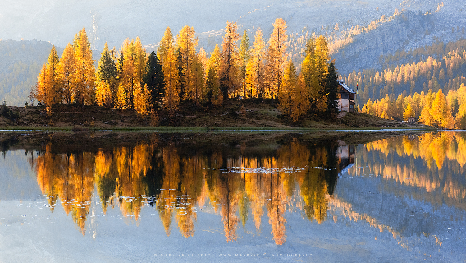 An island of larches lit by the morning sun in the Italian mountains