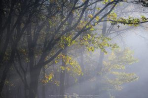 Beautiful sidelight in an autumnal forest,Sussex