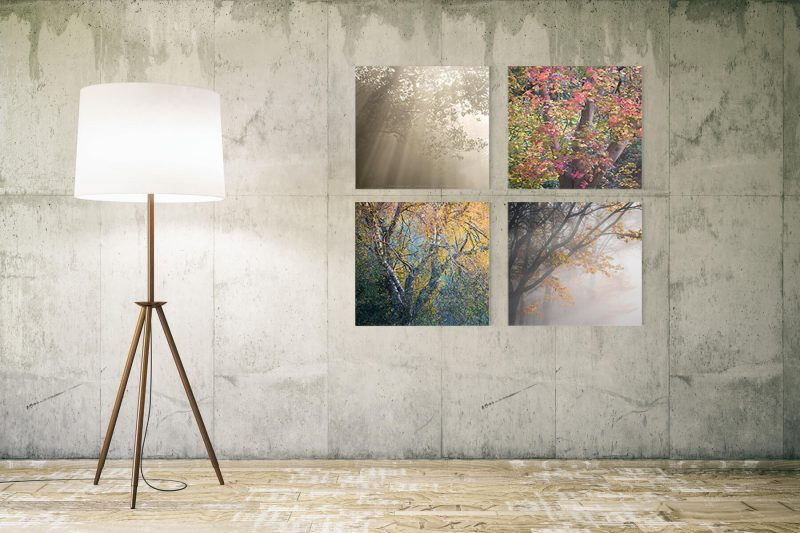 Tree Quartet prints in a room by Mark Price Photography