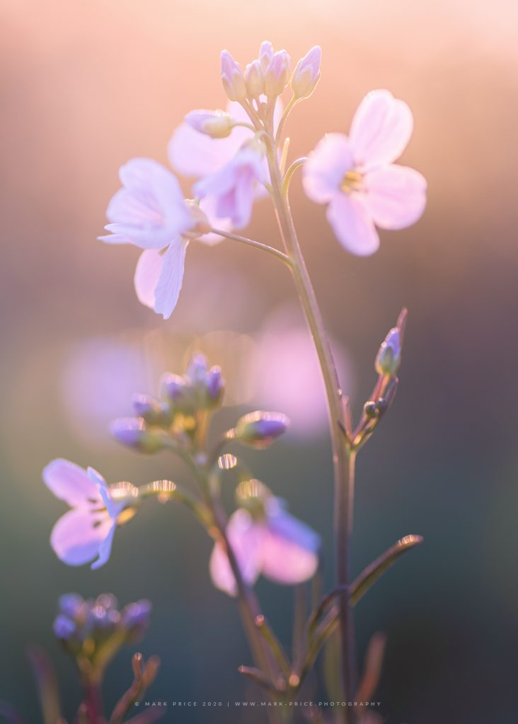 Macro Photograph of early spring wildflowers in Sussex by Mark Price, landscape photographer