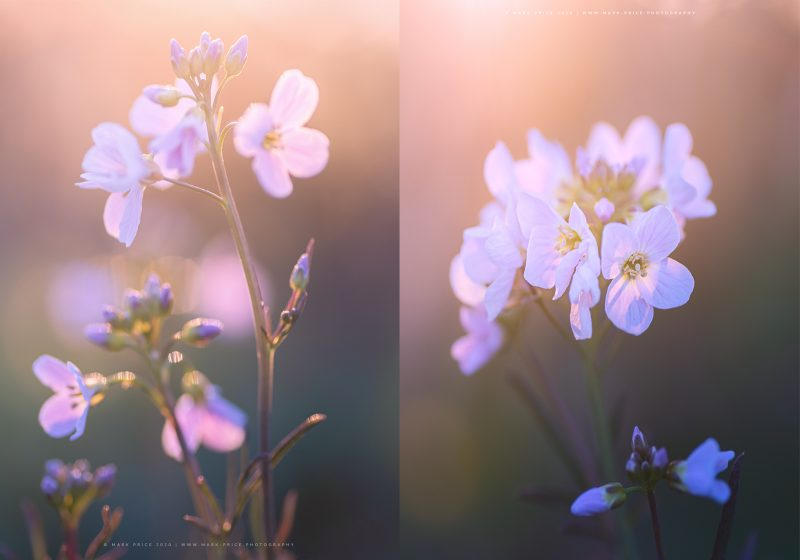 Duo of floral prints by Mark Price Photography