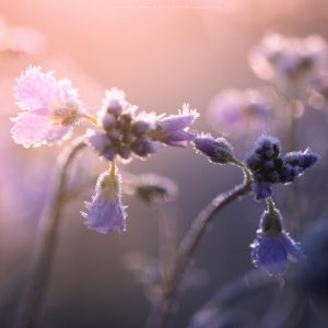 Early morning back lighting of wildflowers in Sussex