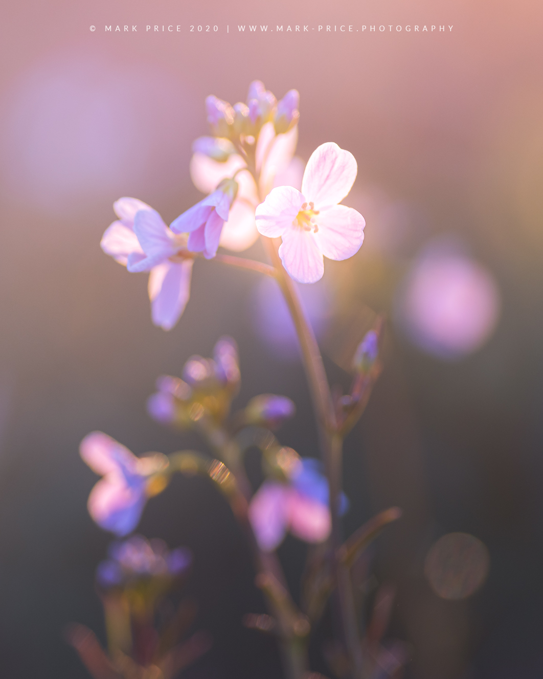 Lovely light illuminating this hedgerow plant in Sussex, England