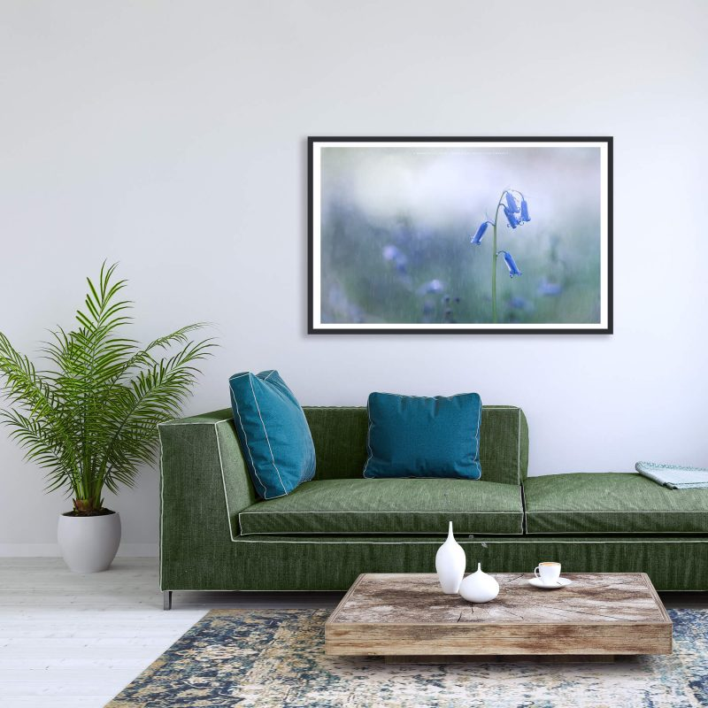 modern living room with Bluebell print by Mark Price Photography