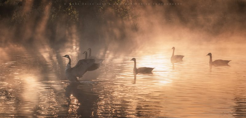 A beautiful moment of light and nature in Sussex