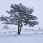 The Ashdown Forest under a blanket of snow in mid-winter