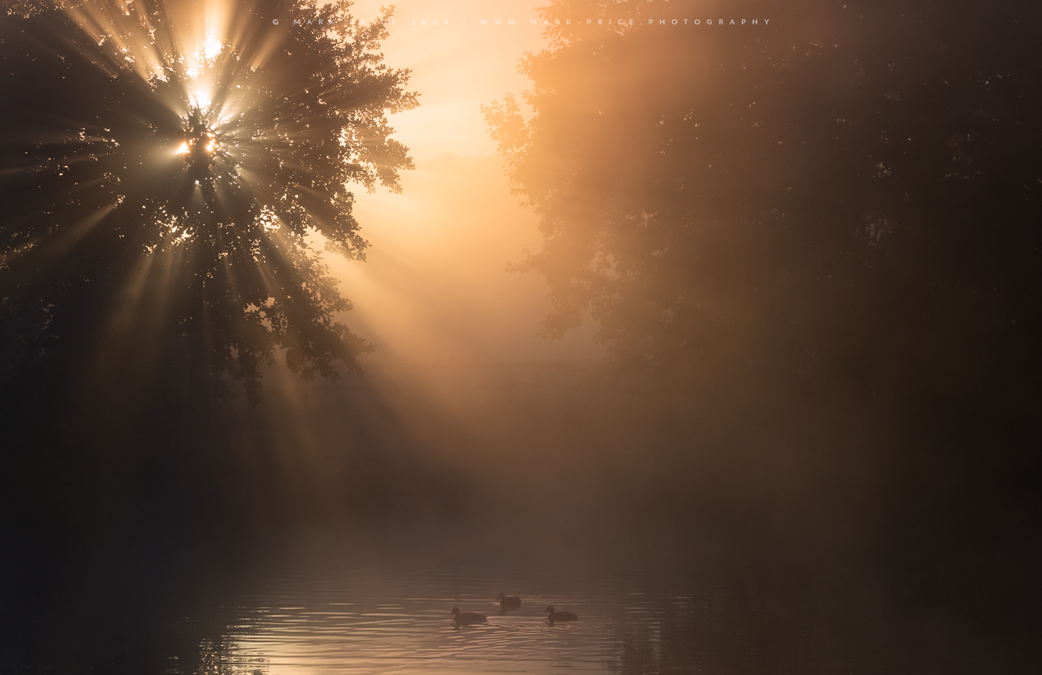 First light emerges through the trees of a quiet Sussex lake