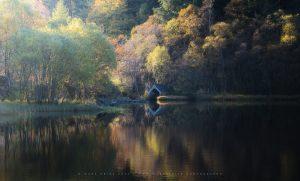 Golden colours in a quiet Trossachs loch, October 2020, Scotland