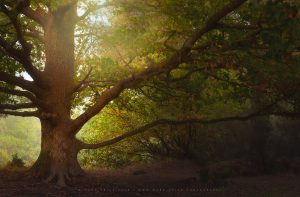 A magical tree in the height of the Autumn season in Sussex