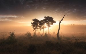 A golden moment of autumnal light in the Ashdown Forest, Sussex
