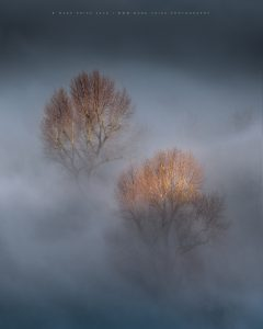 A duo of trees lit by the morning sun rise above a for inversion in Sussex