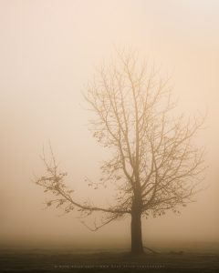 The sparcity of winter sets into a lone tree in the Sussex countryside