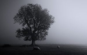 A striking tree and some friendly sheep in the Sussex landscape