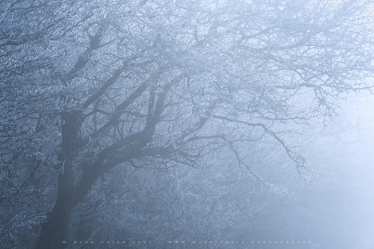 Winter grips the tree line on the South Downs, Sussex, 2021