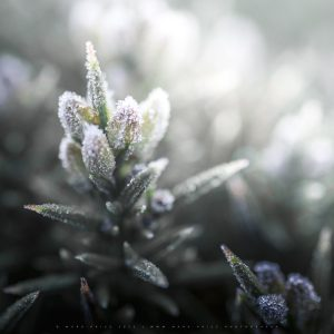 Intimate details of bracken plants frozen by winter morning, Sussex