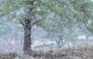 The first snowfall of winter arrives on the Ashdown Forest, East Sussex