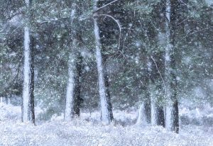 A Snow Blizzard engulfs Ashdown Forest in early February 2021
