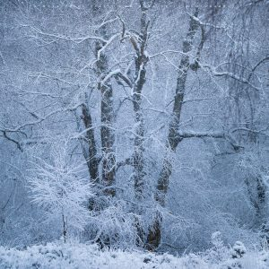 A frigid covering of snow transforms the Ashdown Forest into a winter fantasy scene!
