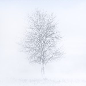 Storm Darcy surrounds this winterised tree on the Ashdown Forest, February 2021