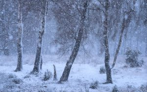 An enchanting winter's afternoon in a Sussex Forest