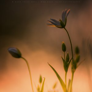 The fine details of wild spring flowers caught in the last light of the day.