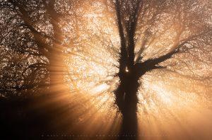 Intense sunrise light cascades through a striking tree in Dorset