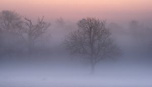 Thick morning mist creating an ethereal atmosphere in the South Downs national park, Sussex