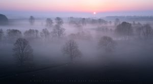 A trio of beautiful trees sit in front of a field of rising mist in Sussex