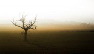 A lone dead tree casts it's shadow across a country field