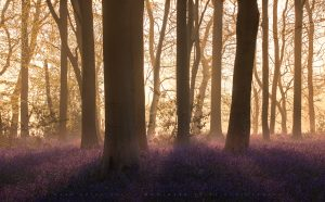First light brings spring to life in one of my favourite forests in the UK