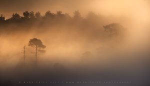 Atmospheric mornings on Ashdown Forest, Sussex