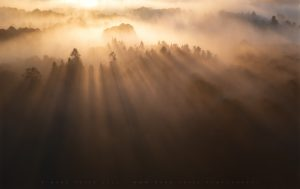 Wonderful light penetrates early autumnal mist in Sussex