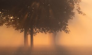 After a long wait in the gloom of a late summer morning, light explodes on this cluster of trees